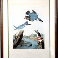 """John J. Audubon's """"Belted Kingfisher"""""""